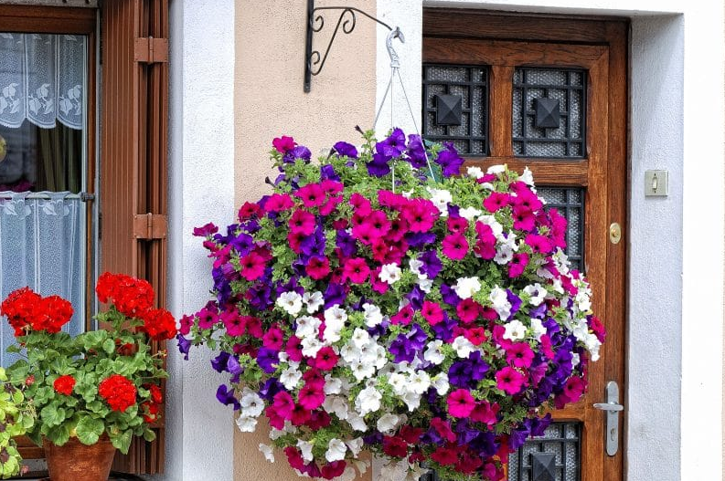hanging flower basket ideas - A Ball of Petunias