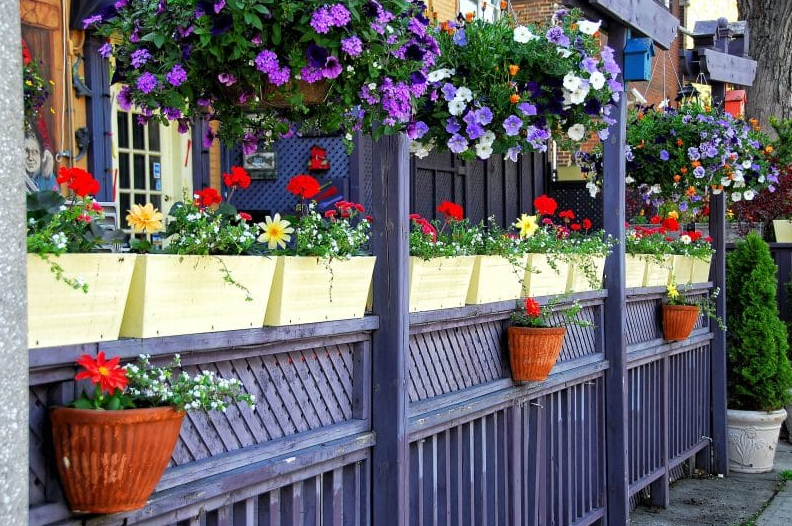 hanging flower basket ideas - Flower-Lined Pergola